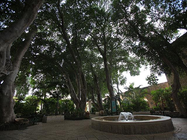 הגן הקסום בכניסה למצודה ההוספיטלרית